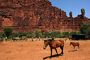Horses in Supai with The Watchers rock formation above Supai, Arizona