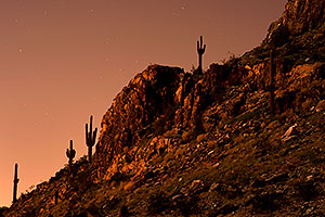 Cactus and stars in the moonlight at Squaw Peak