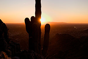 View of Phoenix -- Cactus Sunset at Squaw Peak