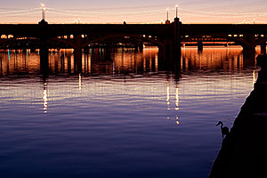 Great Blue Heron fishing at sunset and people on Mill Road bridge over Tempe Town Lake