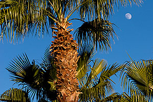 Palm Trees at Kiwanis Park