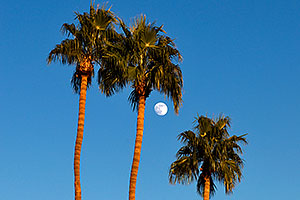Palm Trees and moon at Kiwanis Park