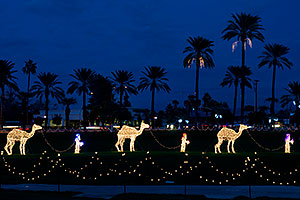 Camel Caravan - Mesa Temple Garden Christmas Lights Display