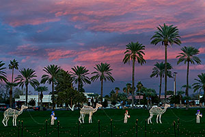 Camel Caravan at Mesa Arizona Temple
