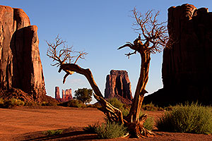 Tree in Monument Valley
