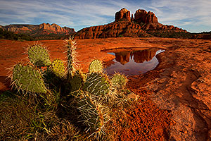 Prickly Pear cactus and Cathedral Rock in Sedona