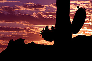Sunset in Superstitions