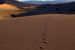 Footprints and Sand Patterns at Mesquite Sand Dunes in Death Valley