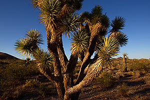 Afternoon at Joshua Tree Highway
