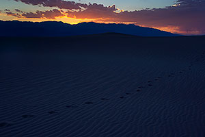 Footprints at Mesquite Sand Dunes in Death Valley