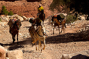 Pack horses along Havasupai Trail
