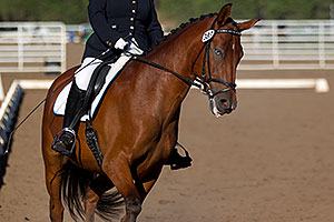 Blue eyed horse at English dressage in Flagstaff