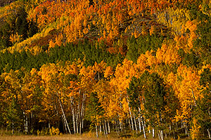Yellow, orange and green Fall Colors in Maroon Bells, Colorado