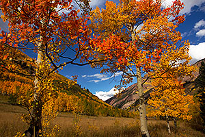Orange and yellow Fall Colors in Maroon Bells, Colorado