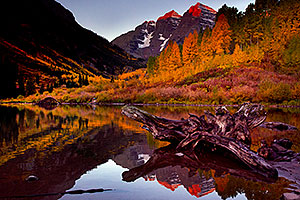 Sunrise reflection of a tree log and Maroon Bells in Colorado