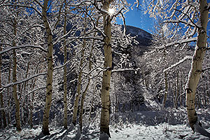 Snowy Trees in Maroon Bells, Colorado