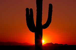 Saguaro cactus at sunset in Superstitions