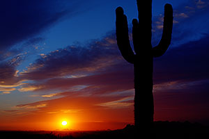 Sunset and Saguaro cactus in Superstitions