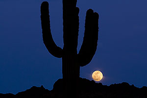 Moon behind Saguaro cactus in Superstitions