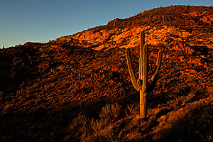 Saguaro in the evening in Superstitions