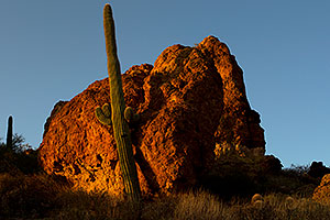 Saguaro Cactus in Superstitions
