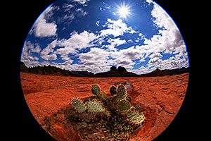 Fisheye view of Prickly Pear Cactus in Sedona