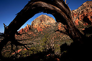 Tree Arch view of Thunder Mountain (Capital Butte) in Sedona