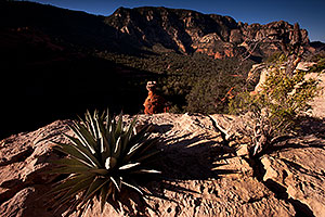 Agave and Hoodoo at Schnebly Hill in Sedona