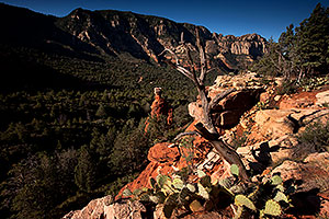Prickly Pear Cactus and Hoodoo at Schnebly Hill in Sedona