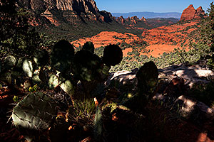 Prickly Pear Cactus at Schnebly Hill in Sedona