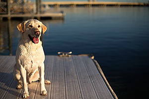 Balou at Tempe Town Lake