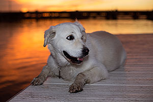 Casper at Tempe Town Lake