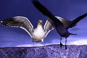 Seagulls by Carlsbad, California