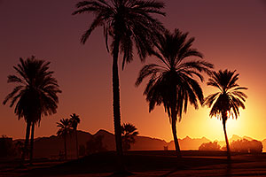 Palm Trees at sunrise at Lake