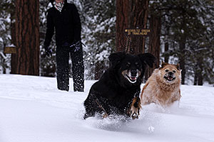 Booda and Dudley in snow in Flagstaff