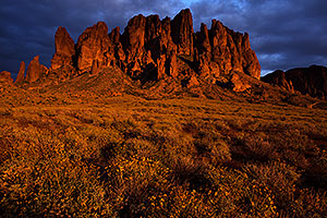Lost Dutchman State Park in bloom in Superstitions, Arizona