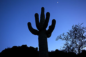 Saguaro Silhouette and moon