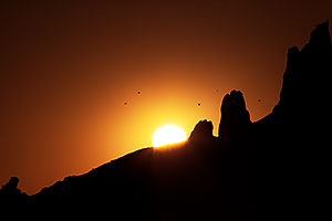 Birds flying at sunrise in Superstitions