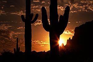 Saguaro silhouettes at sunrise in Superstitions