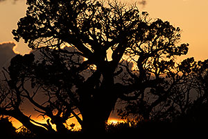 Tree silhouette in Arches National Park