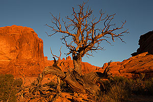 Tree in Arches National Park