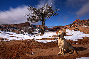 Annie (Labrador Retriever) in Tsegi Canyon