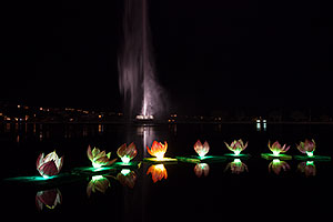 Water Lillies at Chinese New Year Lantern Culture and Arts Festival 2014
