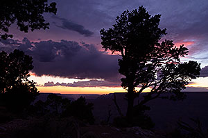 Night tree silhouette at Desert View in Grand Canyon