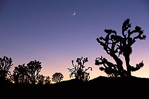 Twilight at Joshua Tree Highway, Nevada