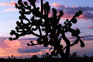 Sunset at Joshua Tree Highway, Nevada