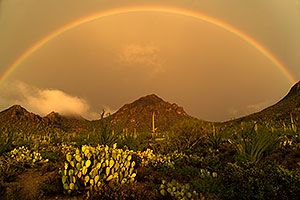 Rainbow and fog during monsoon rain in Tucson Mountains