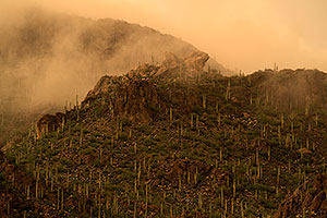 Fog during monsoon rain in Tucson Mountains