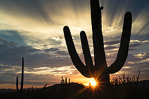 Sunset Saguaro silhouette in Tucson Mountains