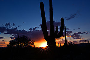Saguaro sunset in Tucson Mountains, Arizona
